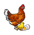 hand drawn brown hen little chicken and peeled vector image