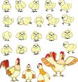 chicken family vector image