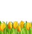 Beautiful Flowers Tulips Isolated vector image