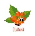 Guarana icon in flat style on white background vector image
