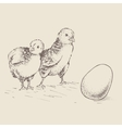 chick egg vector image
