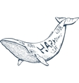 with whale nautical hand vector image