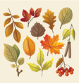 Set of colorful isolated autumn leaves vector image vector image