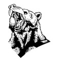 Head of the bear vector image