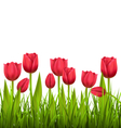 Green grass lawn with tulips isolated on white vector image