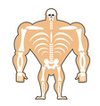 human structure Skeleton men construction of vector image