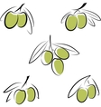 Stylized olives isolated on a white background vector image