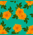 yellow chrysanthemum on green teal background vector image
