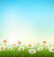 Green grass lawn with white chamomiles on sky vector image