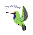 Hummingbird isolated on white background vector image