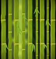Bamboo Forest vector image vector image