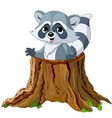 raccoon in tree stump vector image