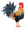 detailed lovely rooster for your design vector image