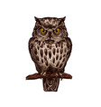 owl bird isolated sketch icon vector image