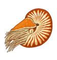 sea creature nautilus pompilius shellfish or vector image