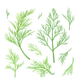 Twigs of dill vector image vector image