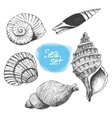 Sea collection of shells Original hand drawn vector image