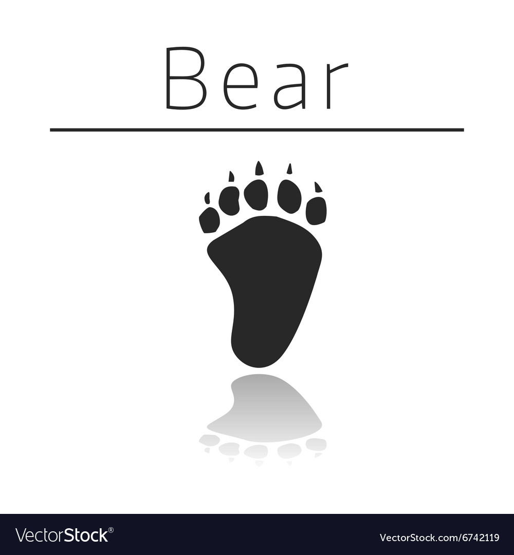 Bear animal track vector
