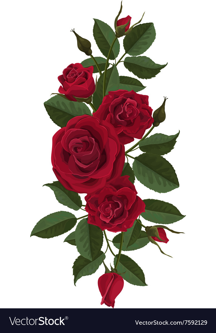 Red roses flowers buds and leaves vector