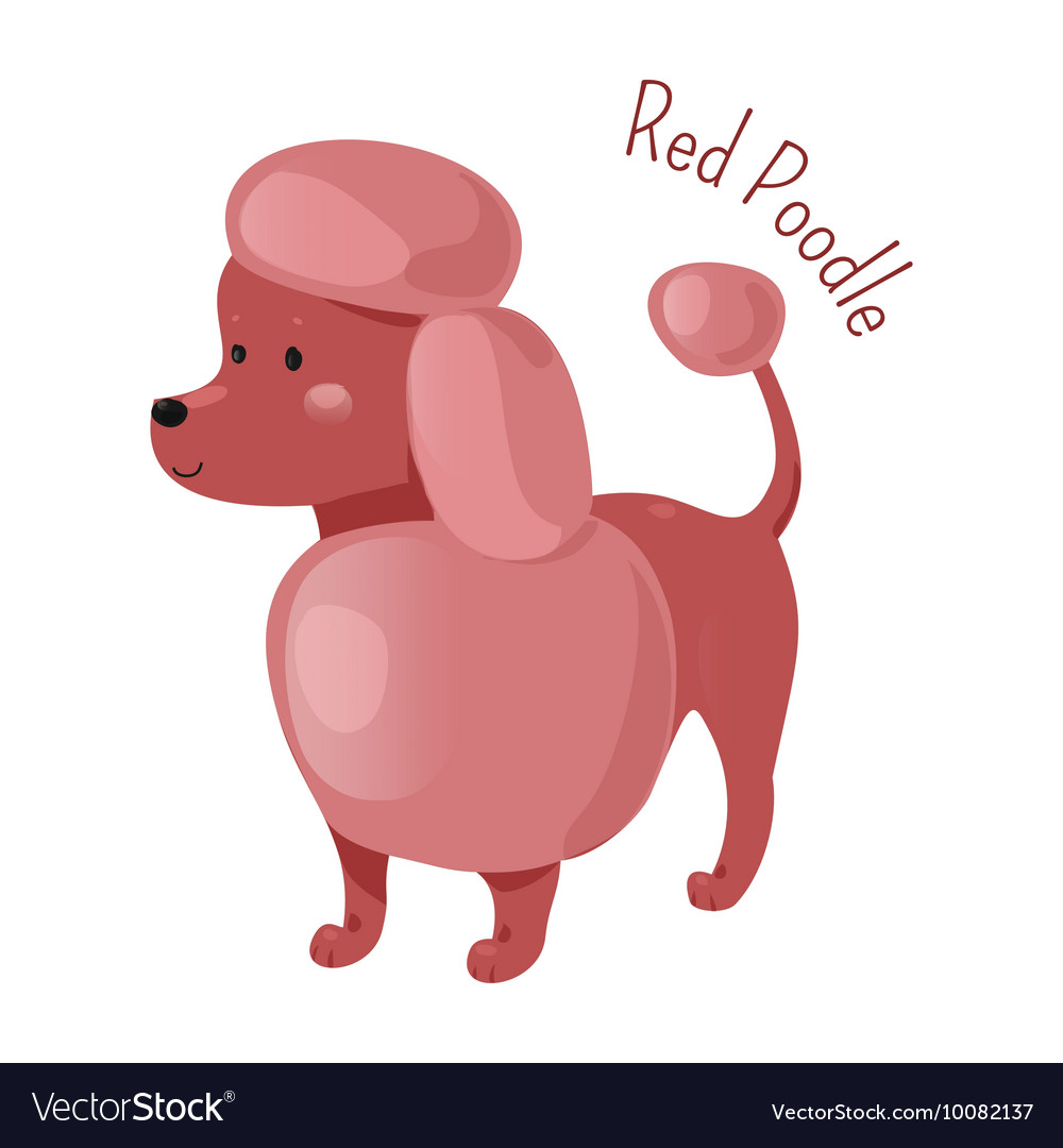 Red poodle isolated child fun pattern icon vector