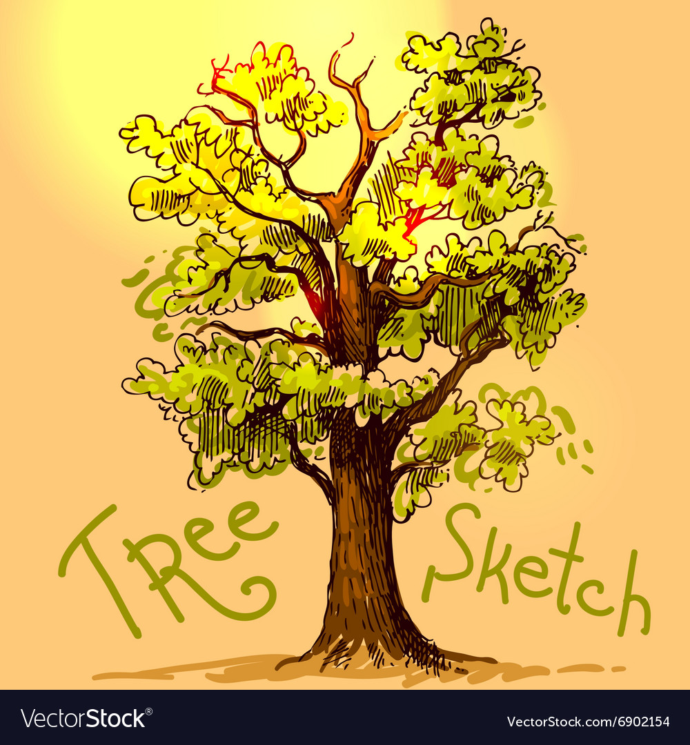 Hand drawn sketch tree vector