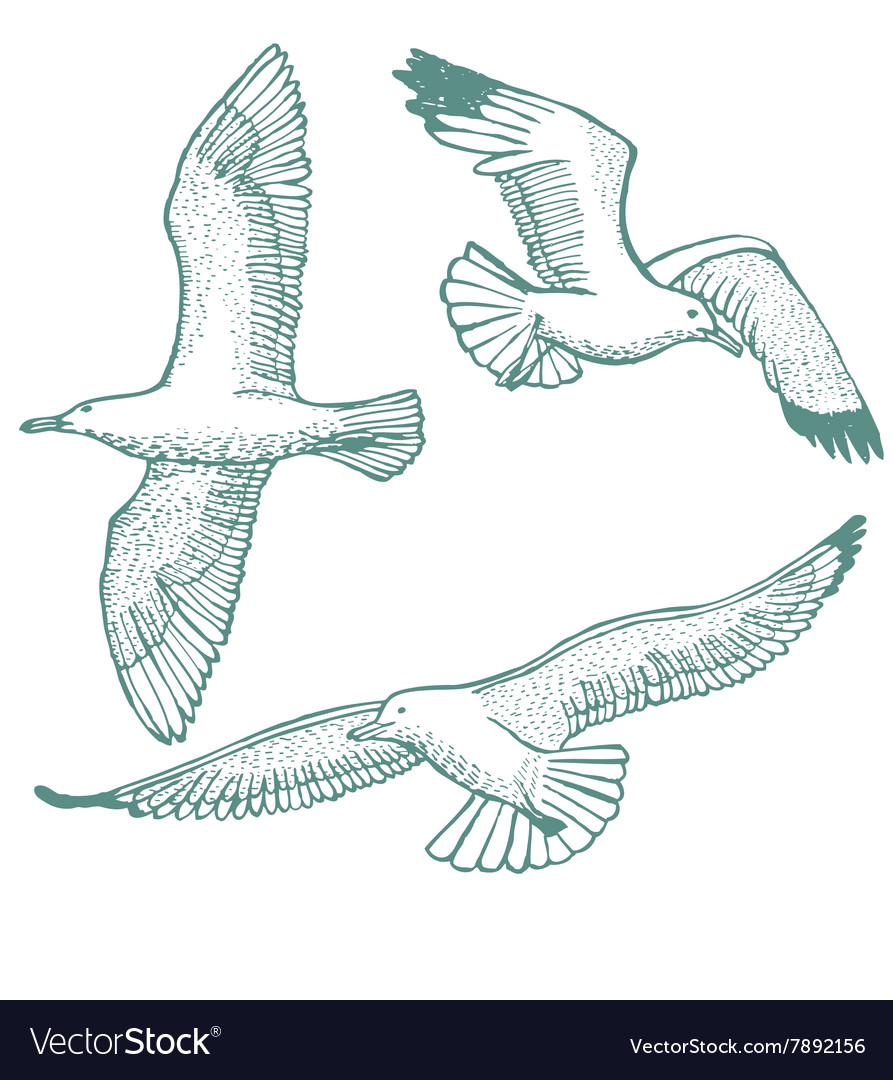 Handdrawn set of seagulls vector