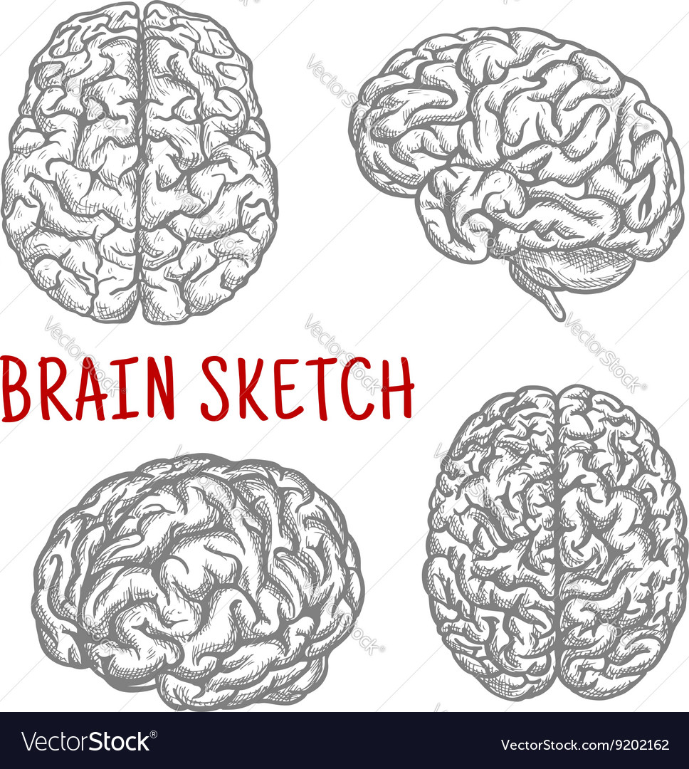Human brain at different angles engraving sketches vector