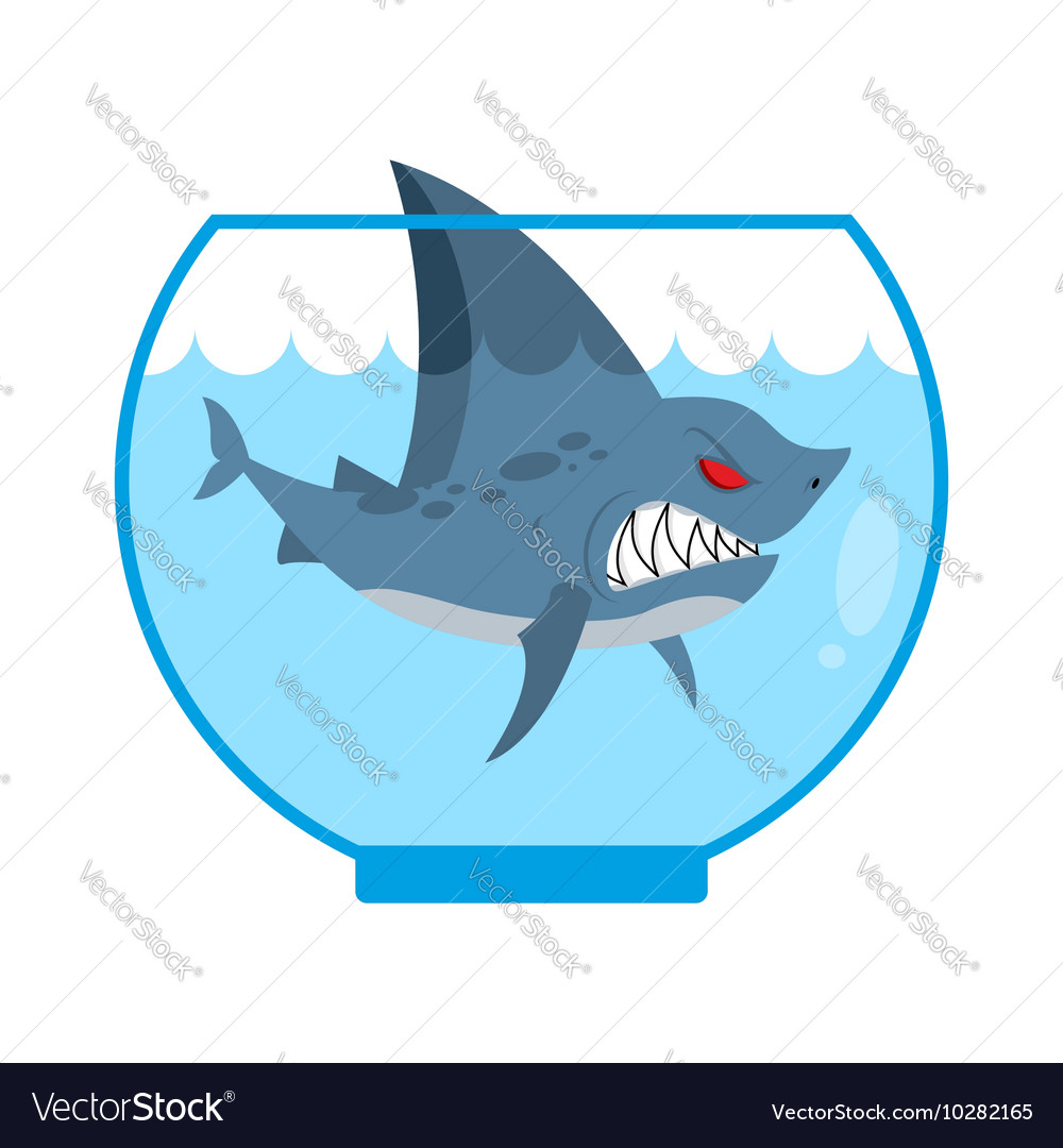 Shark in aquarium angry marine predator with large vector