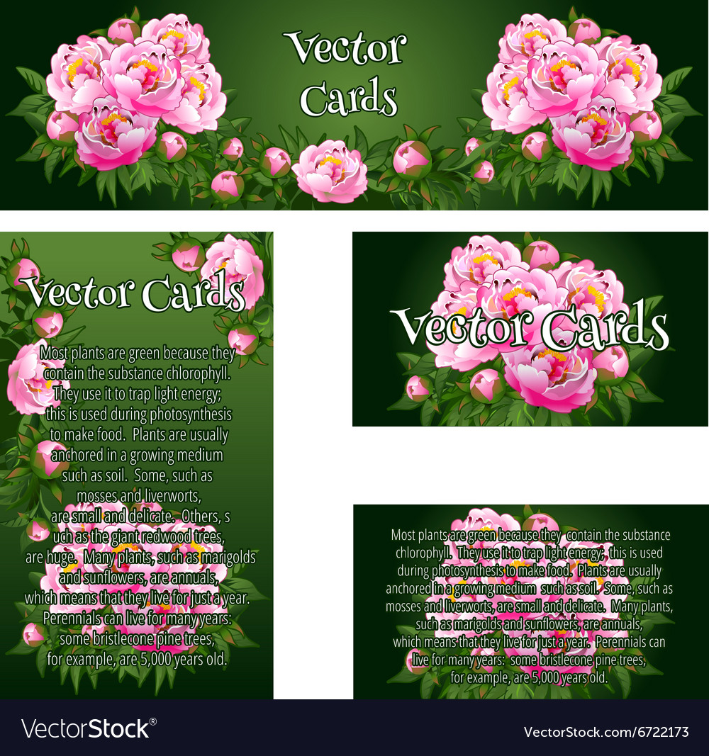 Set of four cards with the image of pink roses vector