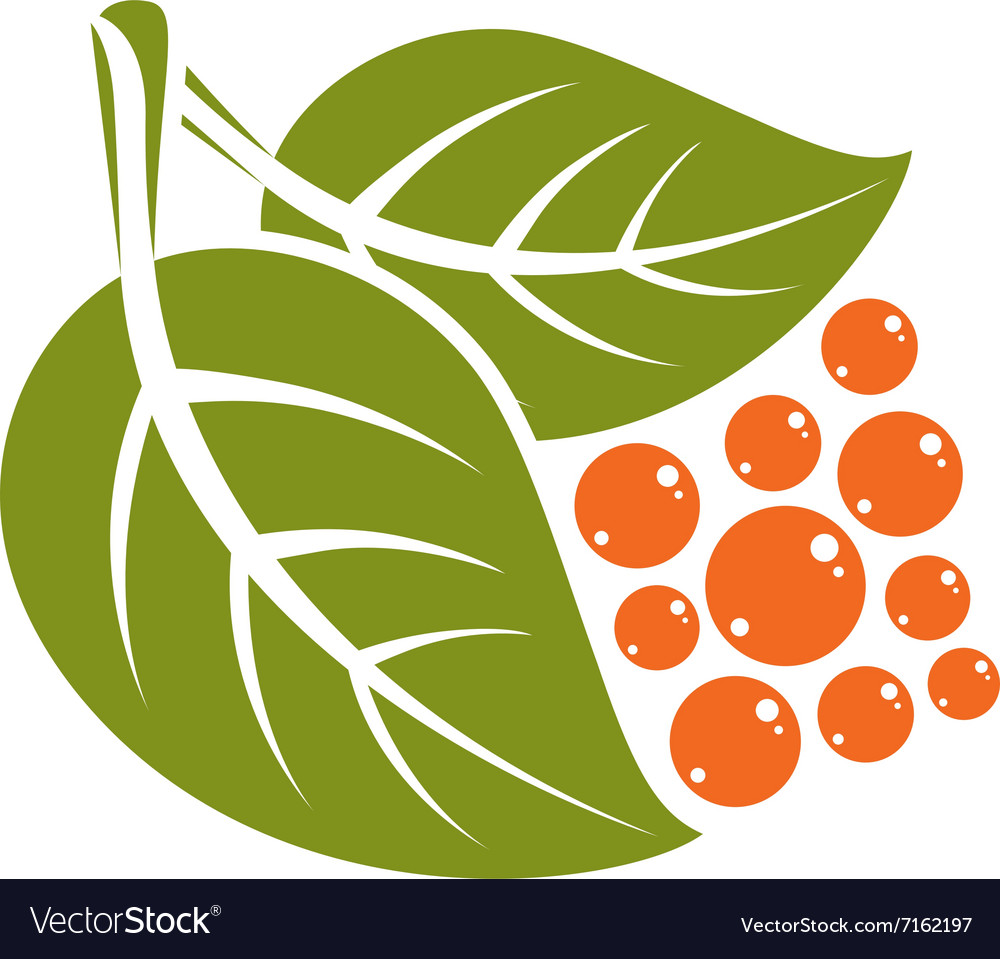 Two spring leaves with orange seeds simple icon vector