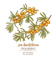 sea buckthorn vector image