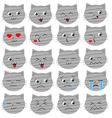 Cute grey cat emoticons vector image