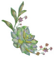 drawn watercolor succulent flower vector image