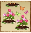Pink peony and butterflies vector image