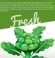 Infographic design with fresh broccoli vector image