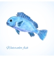 Watercolor fish vector image