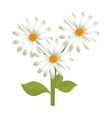 flower floral plant vector image
