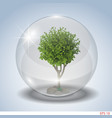 tree in a glass bowl vector image