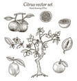 citrus set hand drawing vintage style vector image