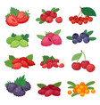 berry berrying mix of strawberry blueberry vector image
