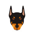 doberman dog head portrait of dog vector image