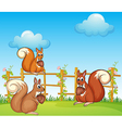 Cartoon Squirrels vector image vector image