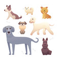 group of purebred dogs for dog vector image
