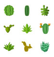 desert plant icons set cartoon style vector image
