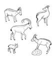 sketch farm animals collection vector image