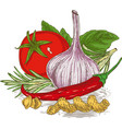 composition with ripe vegetables herbs and pasta vector image