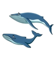 Blue whales swimming underwater vector image vector image