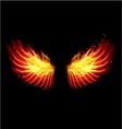 Wing in flame and fire vector image