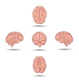 Set of five human brains with shadow from vector image