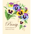 Vintage card with pansies vector image